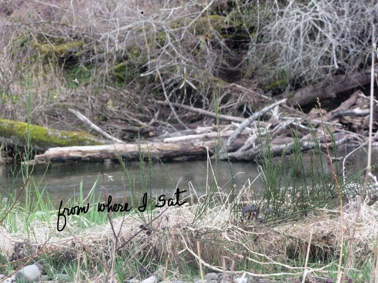 BeaverSpotting