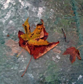 Signs_of_autumn