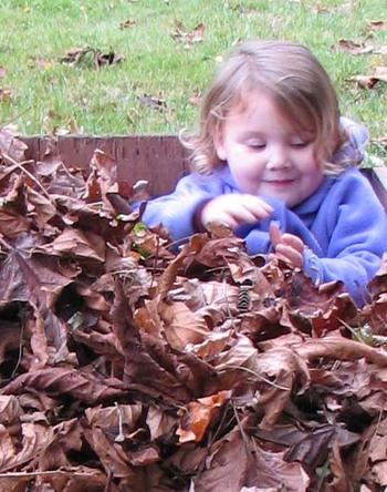 Violet_leaves