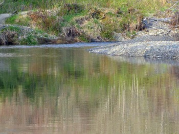 Reflectionsriver1