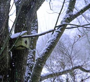 Abandonedbirdhouse